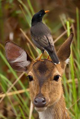 A deer with a bird on its head Source: Pinterest
